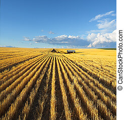 The fields of Montana - Solar autumn midday on fields of...