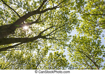Trees from below - Low angle shot of tree with sun shinning...