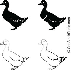 black ducks - the stylized black ducks on a white background...