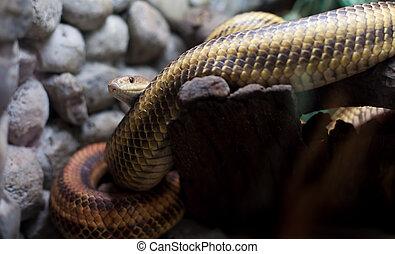 dangerous snake in city zoo
