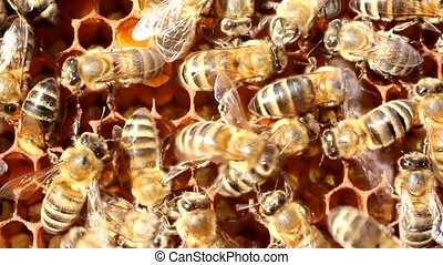 Movement of bees - Bees are always active Certain groups of...