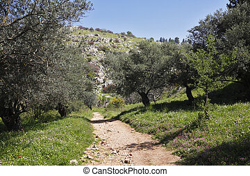 Footpath among the spring nature - Footpath among the...