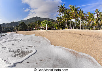 Tropical beach with coconut palms