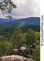 Beautiful green mountain landscape with trees in Carpathians