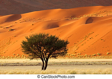 Tree, dune and grass landscape