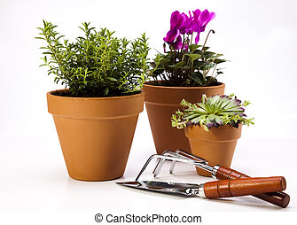 Gardening equipment with plants