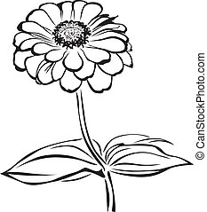 Zinnia - The contour black-and-white image of a flower...