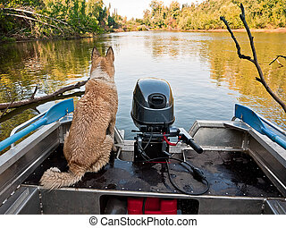 Hunting dog Laika sits in a boat