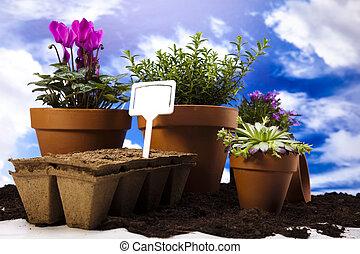 plantas, equipo, jardinería