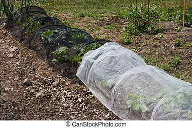 protective netting - vegetables in a community garden...