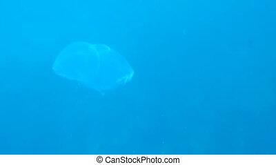 Sunrays on the jellyfish body underwater view