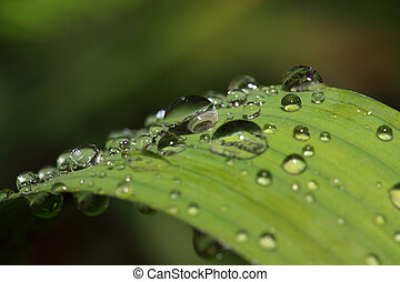 rain dripped on green herb