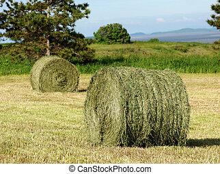 Two Hay Rolls in field - Two hay rolls in a mowed field....