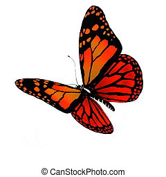 Isolated butterfly of bright color on a white background