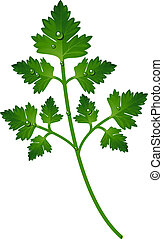 Branch of parsley over white. EPS 10, AI, JPEG