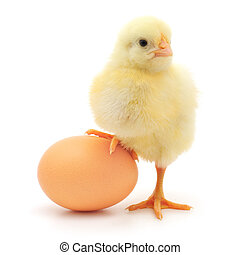 chicken and egg - brown egg and chicken isolated on a white...