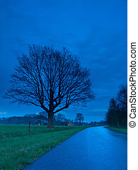 Blue hour tree landscape - Tree along the road during the...