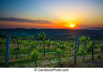 Winery in the Chianti region Italy - Tuscan winery at the...