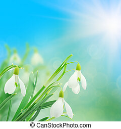 snowdrops with a colorful out of focus background
