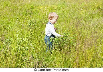 The little boy catches grasshoppers in a grass