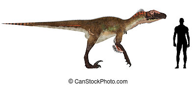 Utahraptor Size Comparison - Illustration of a comparison of...