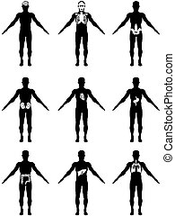 human organs in body icons - isolated human body with organs...
