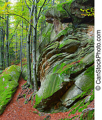 Colorful vertical panorama  in the Carpathian forest