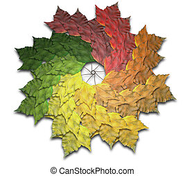 Maple Leaf Autumn Spiralling Spectrum - A spiralling...