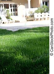 Closeup of green fresh grass