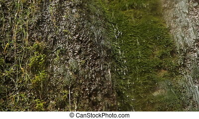 Dripping mossy cliff. Three shots. - Torrents of water...