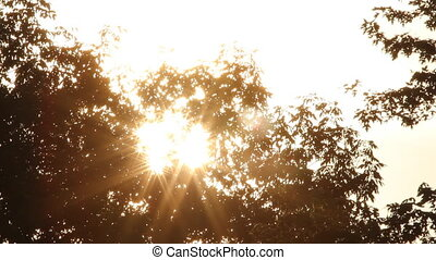 Morning sun shining through trees. - Morning sun shining...