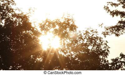 Morning sun shining through trees.