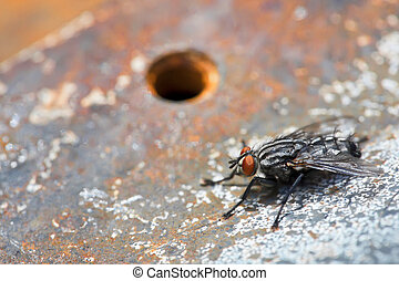 Grunge - Housefly on background of rusty metal Closeup photo...