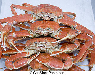 Snow Crabs - Stack of freshly cooked atlantic snow crabs