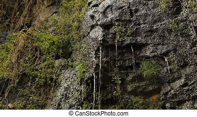 Wet cliff face. Two shots. - Torrents of water flowing down...