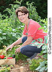 Senior woman picking vegetables in kitchen garden