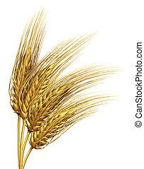 trigo, o, cebada, elemento