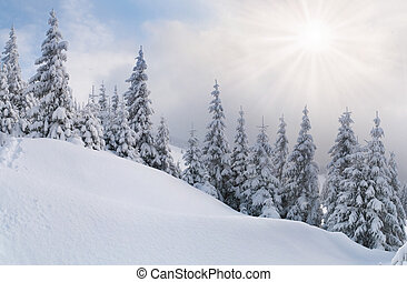 snowstorm in the Carpathian mountains