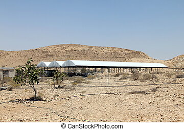Goat farm on the Negev desert landscape background, Israel