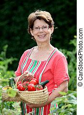 Senior woman picking vegetables in kitchen garden