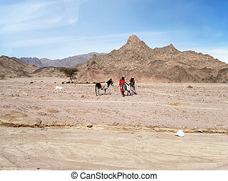 Landscape of Sinai peninsula.