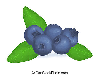Blueberries - Illustration of fresh blueberries and leaves...
