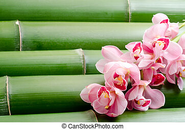Red violet orchid on bamboo - Red violet orchid flowers on a...