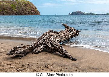 Driftwood on the beach in the shape of the animal