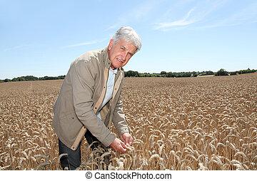 Agronomist working in wheat field in summer season