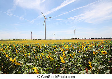 Wind turbines in sunflowers field