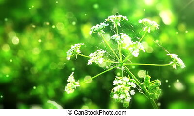 Flower on green folliage background with flying particles HD...