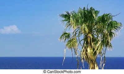 Palmtree and sea. HD 1080.