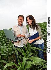 investigadores, trabajando, maíz, campo