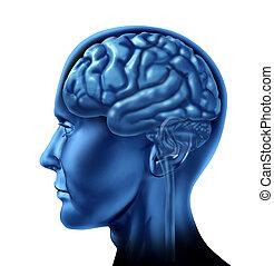 humano, cerebro, lado, vista